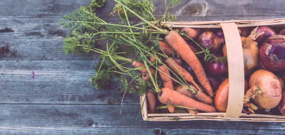 Bannerbild Ernährung und Landwirtschaft